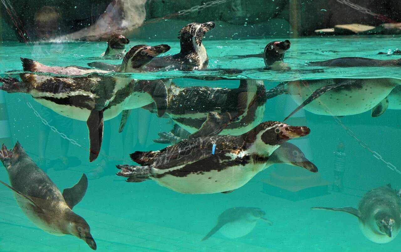 Zoo w Krakowie - pingwiny