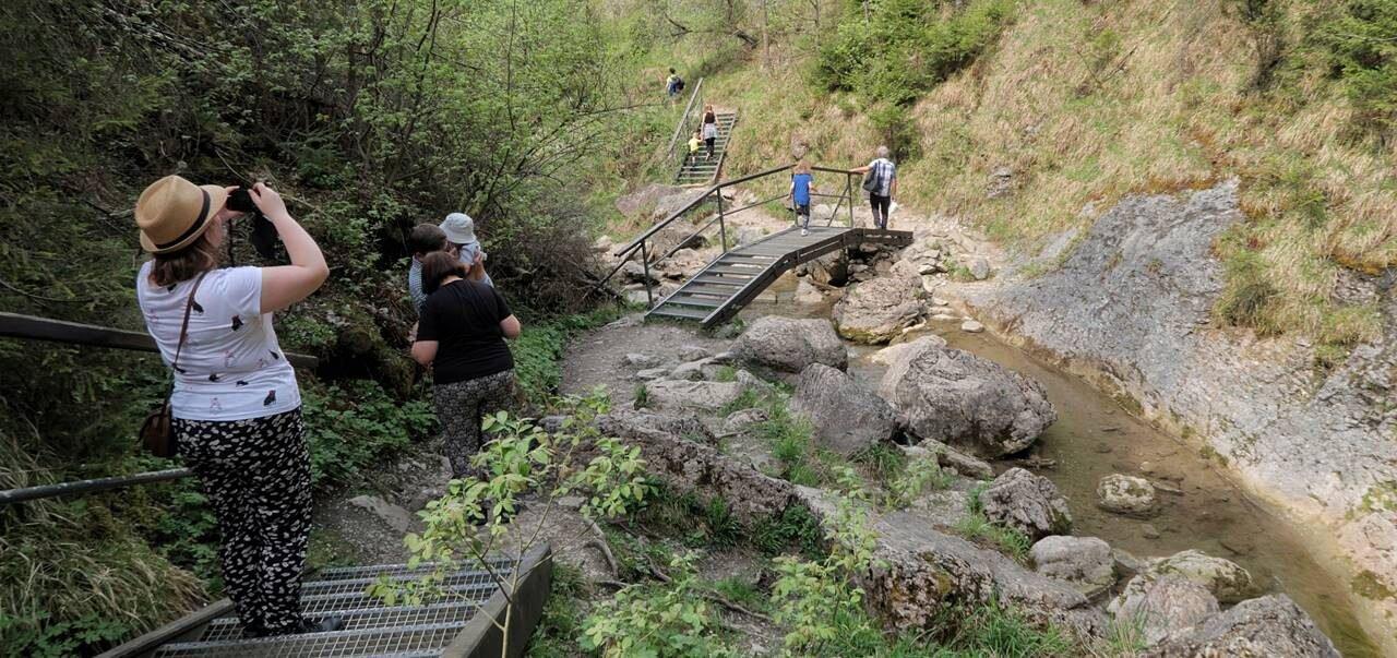 Pieniny - rezerwat przyrody Wąwóz Homole